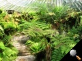 GlasshouseFerns4.JPG